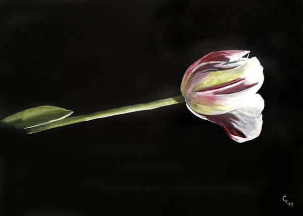 Flower Art Print featuring the painting Tulip by Cheri Homaee