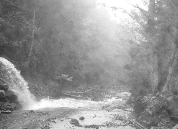 Landscape Art Print featuring the photograph Wet Trail by Mark Camp