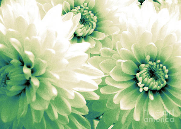 Flowers Art Print featuring the photograph White Chrysanth Flowers by Trude Janssen