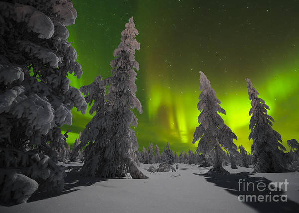 Country Art Print featuring the photograph Winter Night Landscape With Forest And by Oxana Gracheva