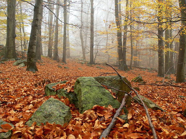 Forest Art Print featuring the photograph In The Autumn Forest by Pavel Jankasek