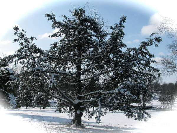 Landscape Art Print featuring the photograph A Tree In Winter by Sherri Williams