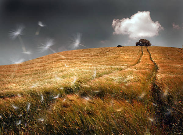 Windy Art Print featuring the photograph Another Windy Day by Mal Bray