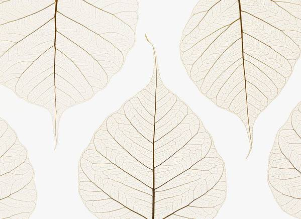 Arranged Art Print featuring the photograph Arranged Leaves by Kelly Redinger