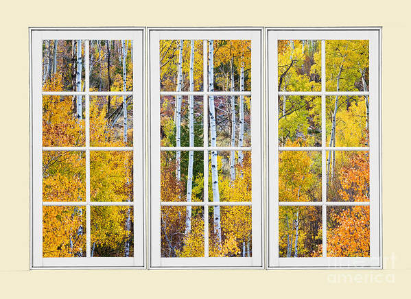 Window Art Print featuring the photograph Aspen Tree Magic Cream Picture Window View 3 by James BO Insogna