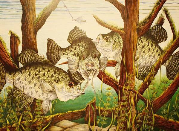 Fishing Art Print featuring the drawing Captivating Crappies by Bruce Bley