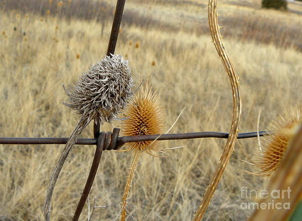 Weeds Art Print featuring the photograph Dead And Alive by Tisha Clinkenbeard