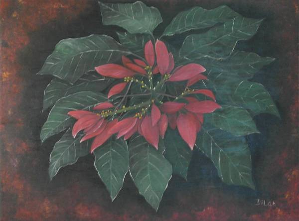 Puerto Rico Art Print featuring the painting Flor De Pascua by Maurice Dilan