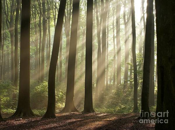Forest Art Print featuring the photograph Forest by Boon Mee