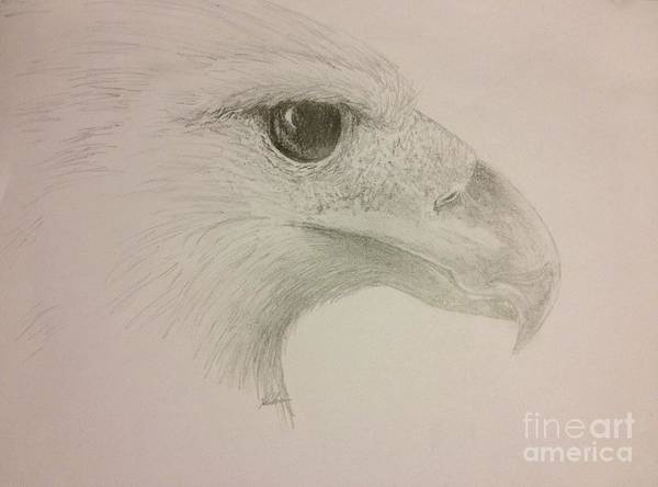 Harpy Eagle Art Print featuring the drawing Harpy Eagle Study by K Simmons Luna