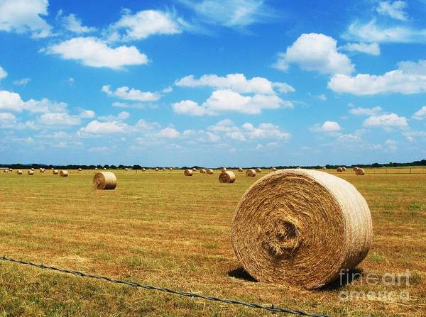Photography Art Print featuring the photograph Hayfield by Venus