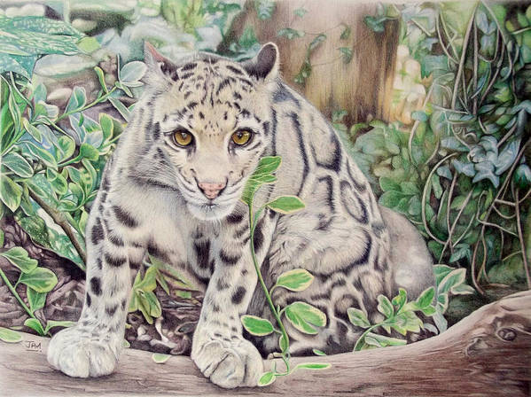 Hidden In Plain Sight Clouded Leopard Art Print By Jill Parry