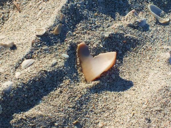 Seashell Art Print featuring the photograph I Heart The Beach by Anna Villarreal Garbis