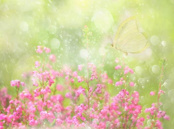 Soft Art Print featuring the photograph It's A Beautiful Day... by Delphine Devos