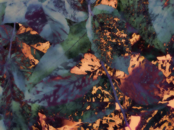 Leaves Abstraction I Art Print featuring the digital art Leaves Abstraction IIi by Devalyn Marshall