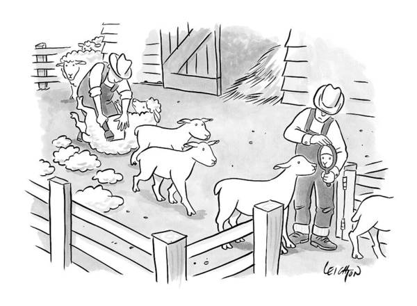Captionless Shaving Art Print featuring the drawing Newly-shorn Sheep Walk Out Of A Barn by Robert Leighton