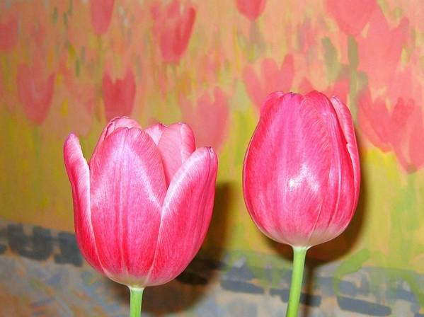 Pink Tulips Art Print featuring the photograph Pink Tulips by Will Borden