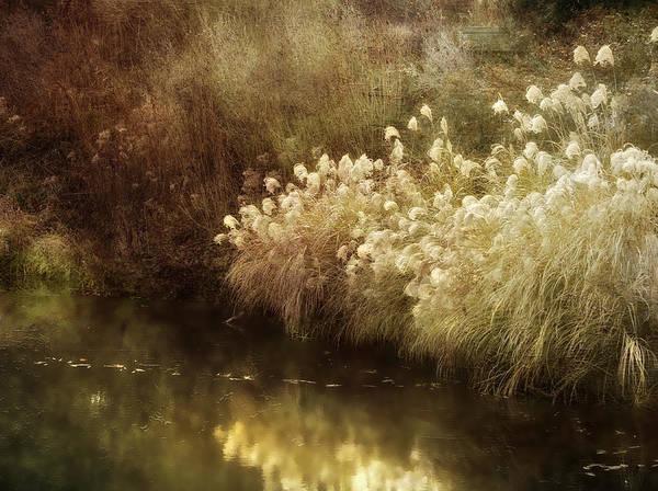 Landscape Art Print featuring the photograph Pond's Edge by Julie Palencia