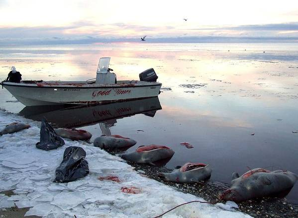 Seals Art Print featuring the photograph Subsistence Way by Penelope Cyr-Lorenson