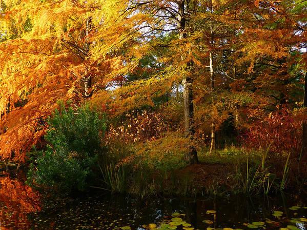 Autumn Art Print featuring the photograph Thoreau's Splendour by Connie Handscomb