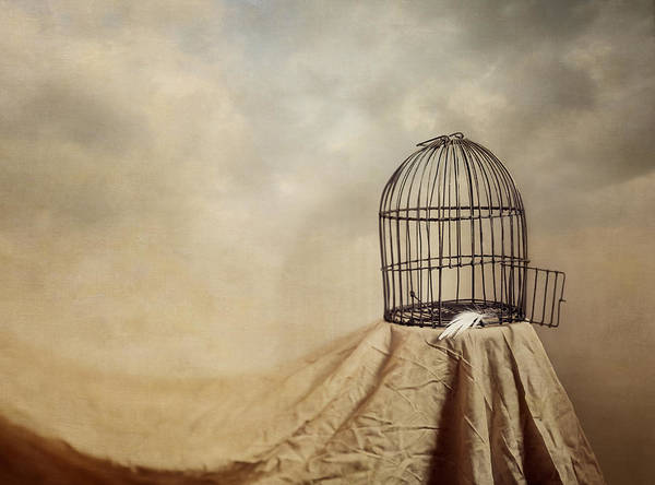 Cage Art Print featuring the photograph Vanishing Act by Amy Weiss