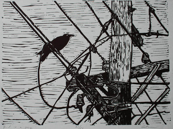 Bird Art Print featuring the drawing Bird On A Wire by William Cauthern