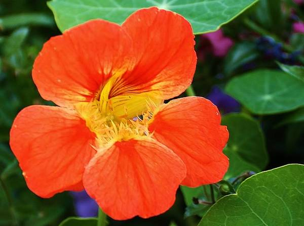 Flora Print featuring the photograph Orange Delight by Bruce Bley