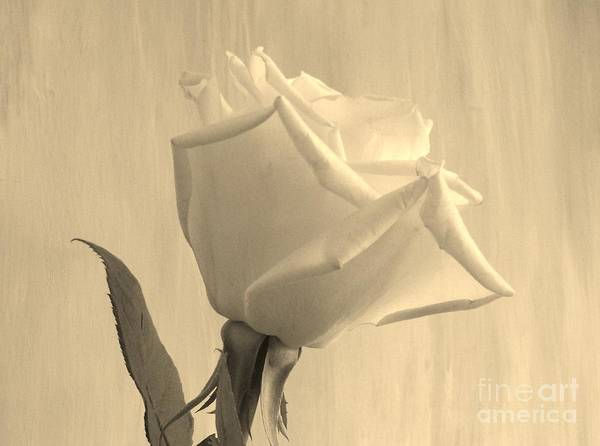 Photo Art Print featuring the photograph A Rose In Sepia Tone by Marsha Heiken