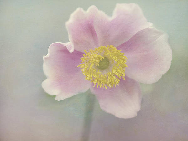 Pink Art Print featuring the photograph Anemone by Cheryl Butler