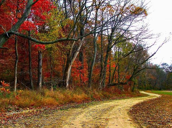 Bottomlands Art Print featuring the photograph Autumn On Bottomland Road by Julie Dant