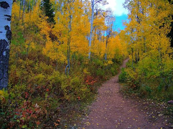 Art Print featuring the photograph Autumn Trails by Shirlene Davis
