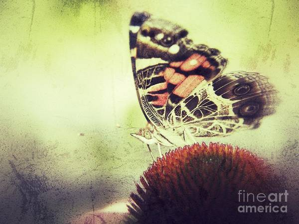 Butterfly Art Print featuring the photograph Butterfly by Christy Bruna