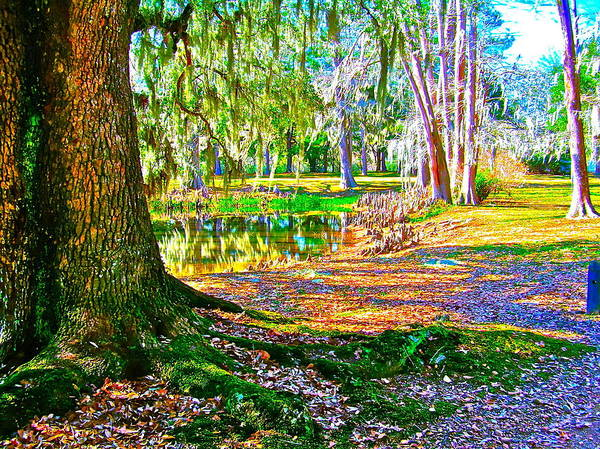 Tree Art Print featuring the photograph Cool Feeling by Frank SantAgata