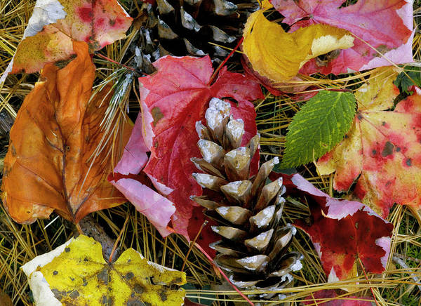 Fall Colors Art Print featuring the photograph Forest Floor Portrait by Rich Franco