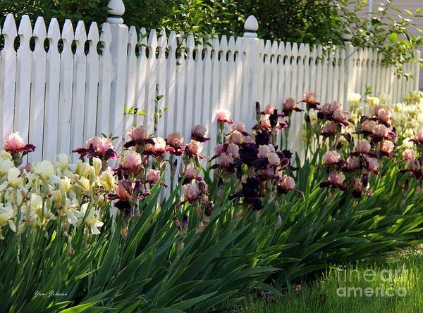 Iris Art Print featuring the photograph Iris With Fence by Yumi Johnson