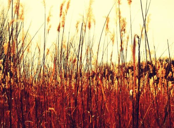 Grasses Art Print featuring the photograph Lost In A Crowd by Andrea Dale