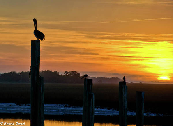 Chas Art Print featuring the photograph Pelican Sunset by Calvin Smith