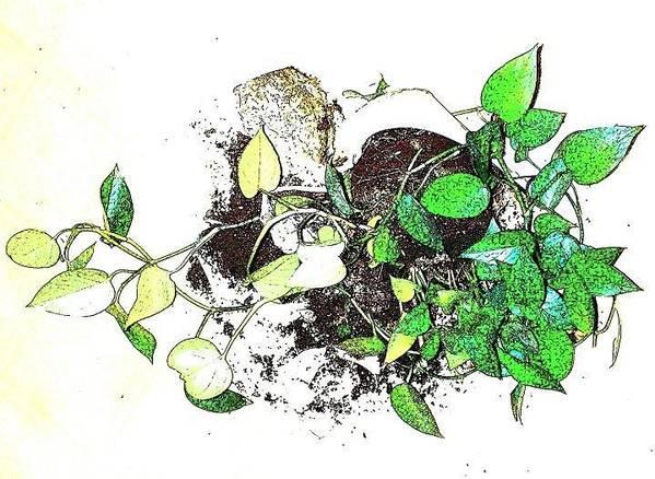 Plant Print featuring the mixed media Plant Falls by YoMamaBird Rhonda