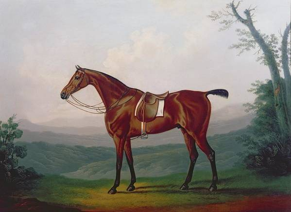 Portrait Of A Race Horse Print featuring the painting Portrait Of A Race Horse by Daniel Clowes
