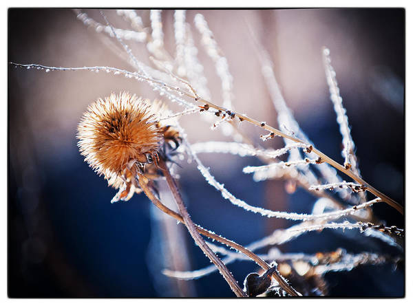 Nature Art Print featuring the photograph Road Side Plant by Lisa Spencer
