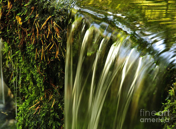 California Art Print featuring the photograph Shades Of Green by Katja Zuske