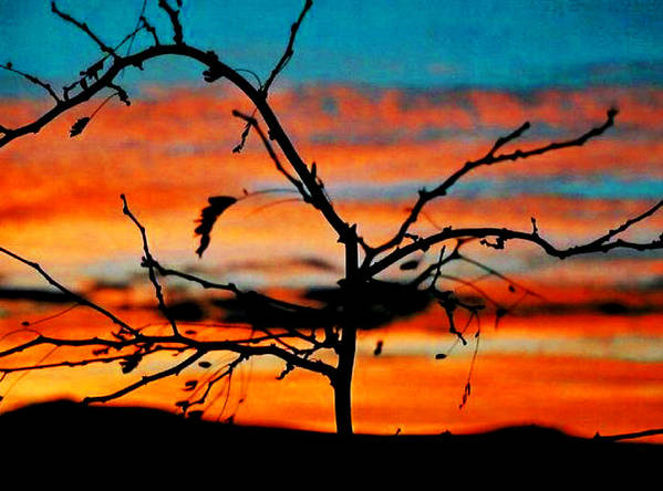 Sun Art Print featuring the photograph Sunset In Nevada by Stephani JeauxDeVine
