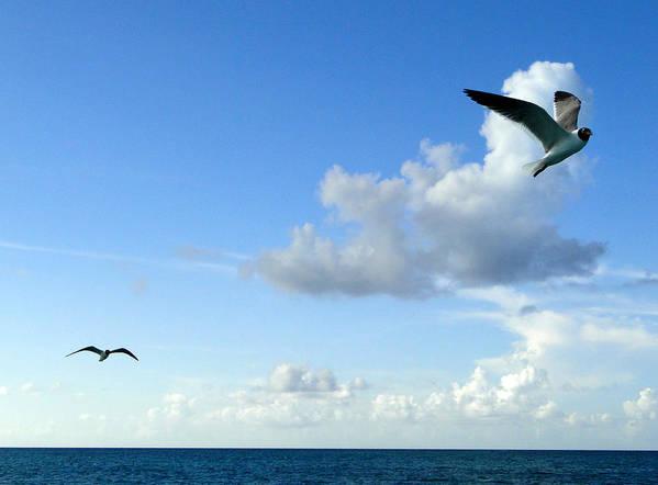 Seagulls Art Print featuring the photograph Turks 14 by Allan Rothman