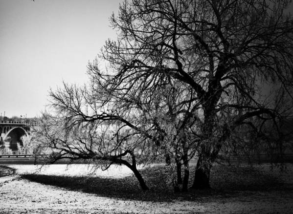 Black And White World Photographer Art Print featuring the photograph Under The Waiting Tree by The Artist Project