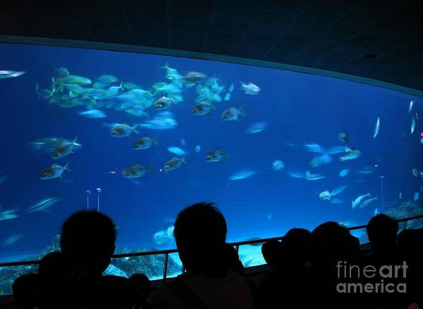 Tank Art Print featuring the photograph Visitors At Ocean Aquarium by Yali Shi