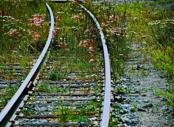 Railroad Art Print featuring the photograph Wildflower Railroad by Eric Tressler