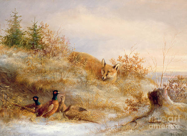 Fox And Pheasants In Winter (oil) Landscape; Snow; Pheasant; Male; Female; Cock; Hen; Prey; Stalking Art Print featuring the painting Fox And Pheasants In Winter by Anonymous