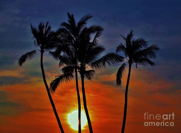 Sunset Art Print featuring the photograph Sunlit Palms by Craig Wood