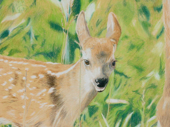 Fawn Art Print featuring the painting Alert Fawn by Miriam A Kilmer