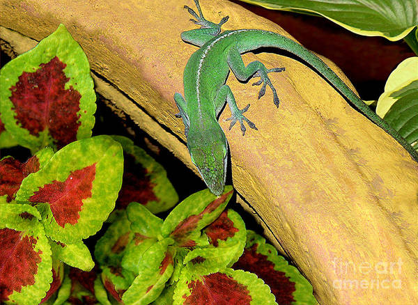Nature Art Print featuring the photograph Anole Having A Drink by Lucyna A M Green